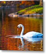 Autumn Swan Lake Metal Print