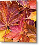 Autumnal Carpet Metal Print