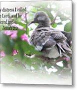 Baby Dove Jonah 2 V 2 Metal Print