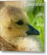 Baby Goose Card Metal Print