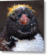 Baby Penguin Metal Print