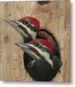 Baby Pileated Woodpeckers Peer Metal Print