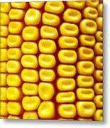 Background Corn Metal Print