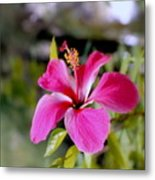 Bahamian Flower Metal Print
