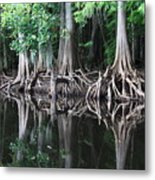 Bald Cypress Trees Along The Withlacoochee River Metal Print