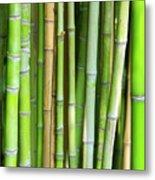 Bamboo Background Metal Print by Carlos Caetano