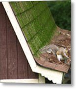 Barn Squirrel Metal Print