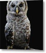 Barred Owl Baby -4 Metal Print