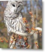 Barred Owl Portrait Metal Print by Cindy Lindow