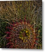 Barrel Cactus Top View Metal Print