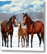 Bay Horses In Winter Pasture Metal Print by Crista Forest