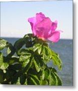 Beach Rose Metal Print