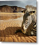 Beach Zebra Metal Print