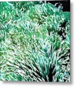 Beautiful Coral Reef 2 Metal Print