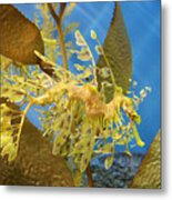 Beautiful Leafy Sea Dragon Metal Print by Brooke Roby