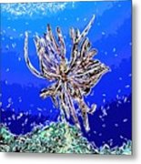 Beautiful Marine Plants 1 Metal Print