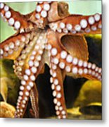 Beautiful Octopus Metal Print