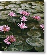 Beautiful Pink Lotus Water Lilies Bloom Metal Print