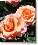 Beautiful Pink Orange Rose Flowers Garden Baslee Troutman  Metal Print