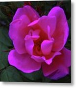 Beauty Unfurls Metal Print