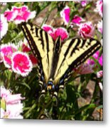 Beautyfly In Pink Metal Print