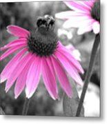 Bee And Cone Flower Metal Print