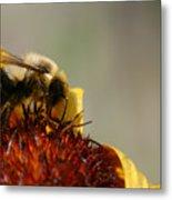 Bee Four Metal Print
