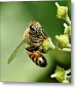 Bee On A Flower Closeup Metal Print
