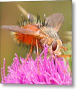 Bee On A Thistle Metal Print
