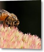 Bee On Flower 2 Metal Print