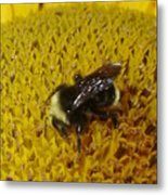 Bee On Sunflower 4 Metal Print