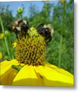 Bees At Work Metal Print
