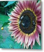 Bees On Sunflower 109 Metal Print