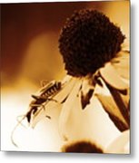 Beetle And Black Eyed Susan Metal Print