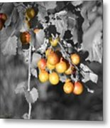 Before The Wine Metal Print