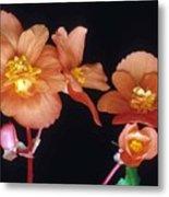 Begonia Buddies Metal Print