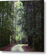 Beidler Forest Metal Print