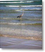 Being One With The Gulf - Alert Metal Print