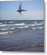 Being One With The Gulf - On Wings Metal Print