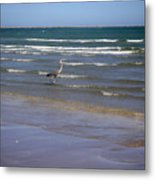 Being One With The Gulf - Wading Metal Print