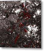 Berry Trees Metal Print