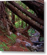 Big Sur Redwood Canyon Metal Print