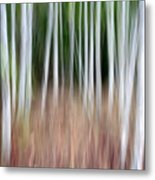 Birch Grove Impressions Metal Print