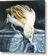 Bird Original Oil Painting Metal Print