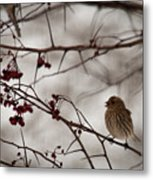 Bird With Berry Metal Print