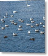 Birds On The Water Metal Print