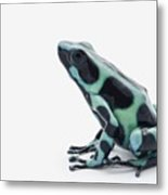 Black And Green Poison Dart Frog Metal Print