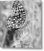 Black And White Butterfly On Clover Metal Print