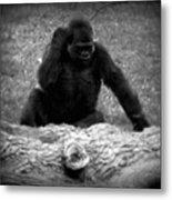 Black And White Gorilla Metal Print