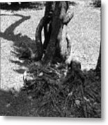 Black And White Roots Metal Print